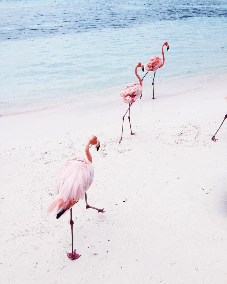 Girlsquad goals #thisweek #thebigflamingoedit #daphisticated #flamingolover