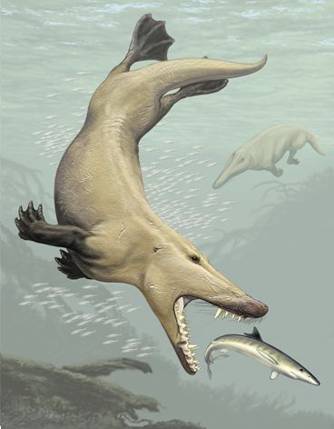 Ambulocetus.  Whale ancestor. How cool is that? (from the Tangled Bank, by Carl Zimmer)