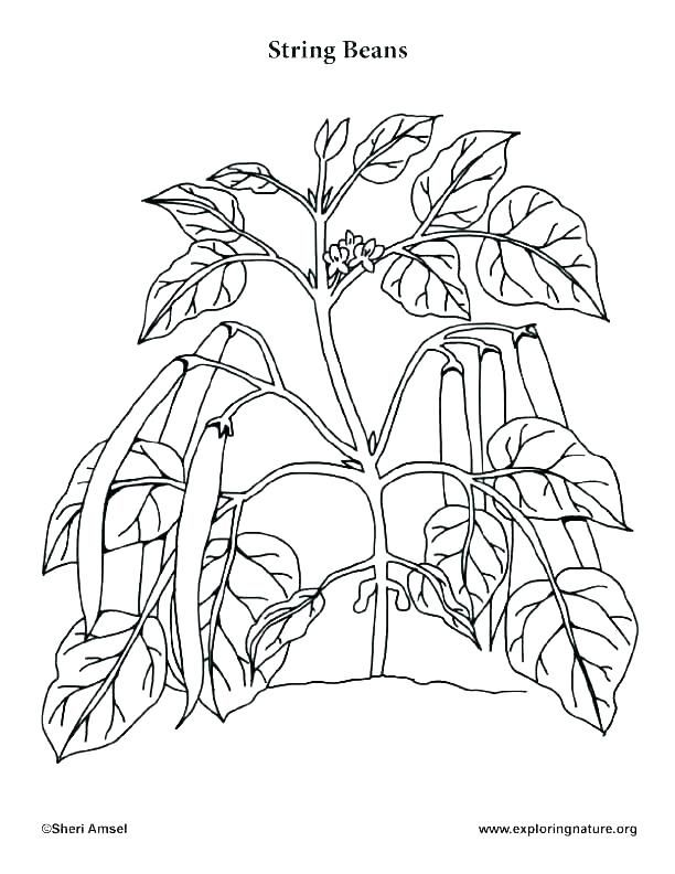 Mushroom Colouring Pages Coloring Pages Trees Plants And Flowers