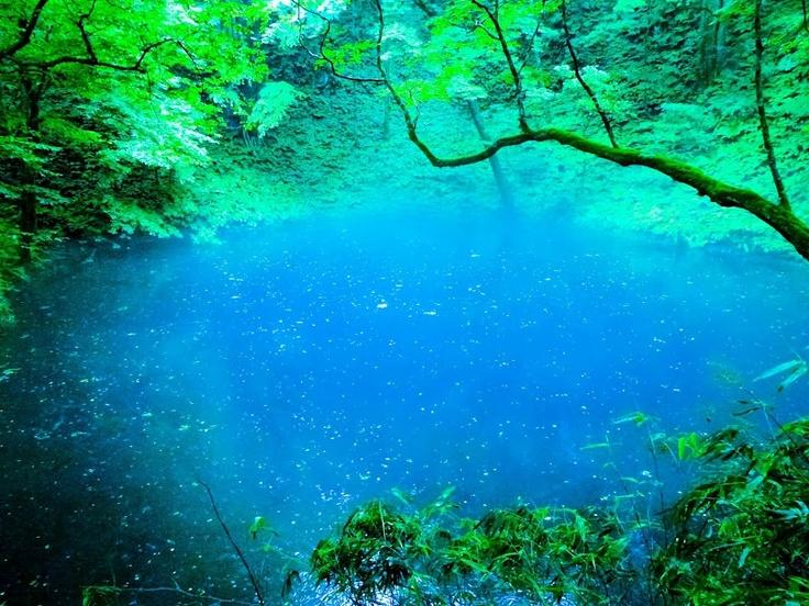 gaogao kazuo - Google+ - 五能線の旅3白神山地の端にある十二湖(実際は33湖の沼があるそうだ)のうちの青池。見て...