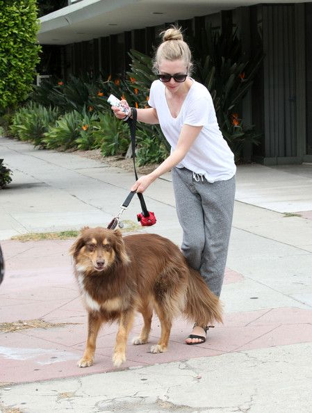 amanda seyfried dogs photos | Amanda Seyfried drops off her dog Finn for some grooming at The Dog ...