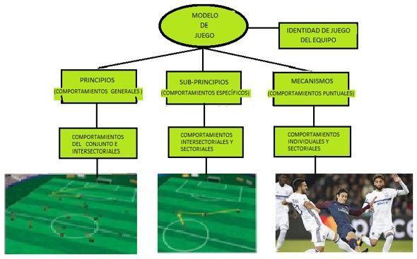 Todo Sobre La Periodización Táctica Entrenador Futbol Periodizacion Entrenamiento Entrenamiento Futbol