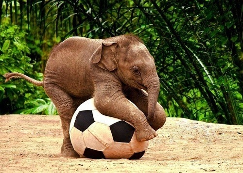 i want one: Babies, Plays Soccer, Animals, Baby Elephants, Soccer Ball, Baby Animal, Elephants Plays, Adorable, Things