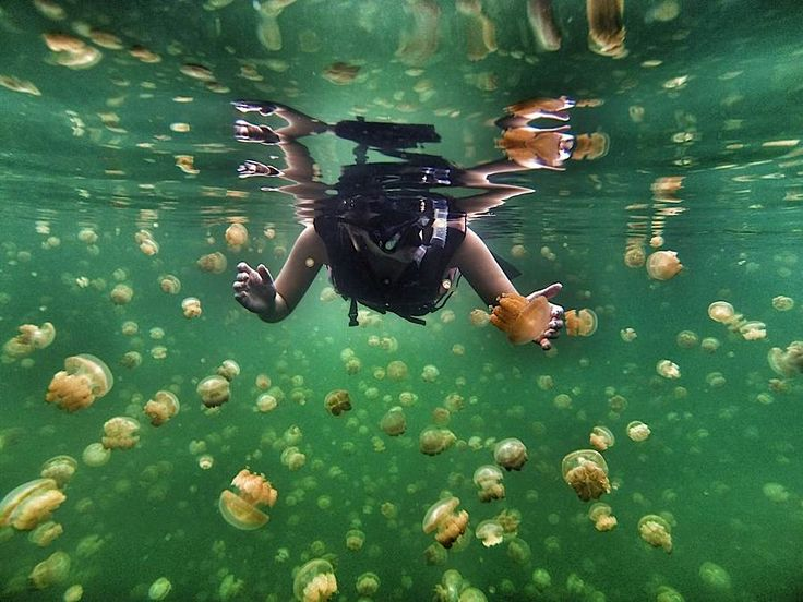 Best GoPro Images On Pinterest Camera Shots Gopro Hd And - 33 incredible photos taken gopro