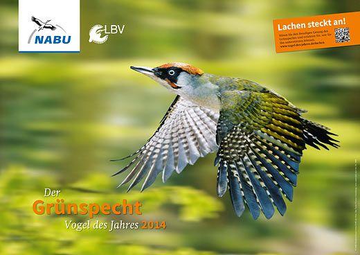 NABU | Projekte & Aktionen | Vogel des Jahres | 2014: Der Grünspecht