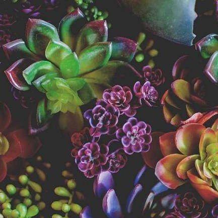 Sukulenty-rośliny dla leniuchow. To nowy wpis na blogu #wogrodzienajlepiej #sukulenty #suculentas #greenpower #lovesuculentas #kwiaty #rosliny