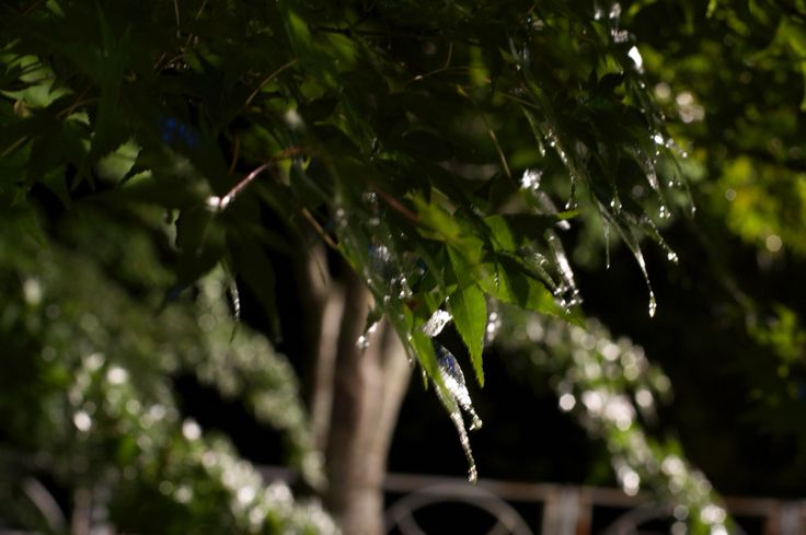青森県黒石市 中野もみじ山  生憎の雨でしたが、むしろ良い演出になったと感じてます。