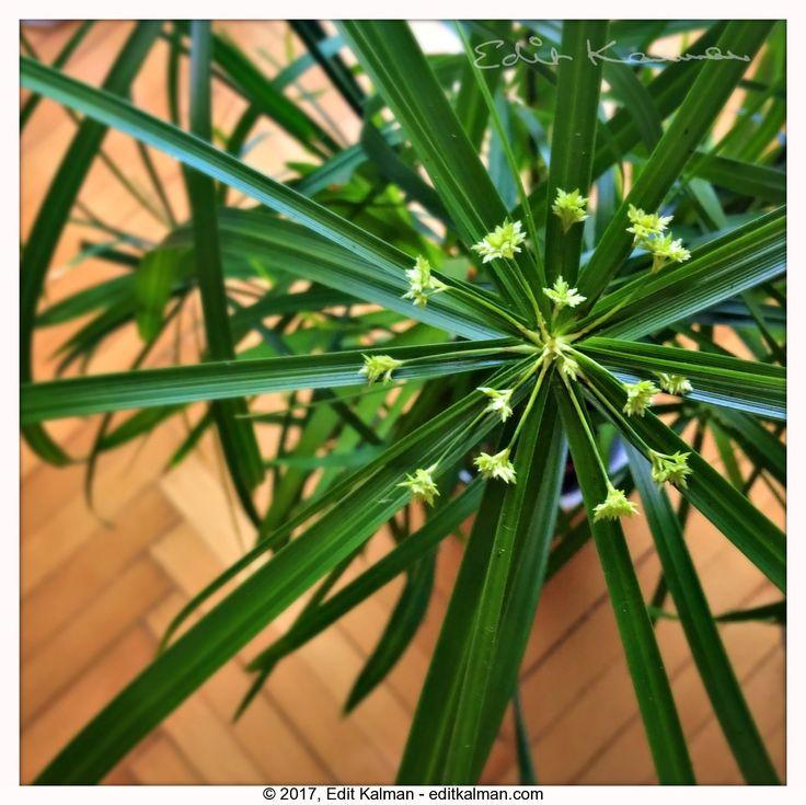 Homey #Floor, #Green, #Home, #Nature, #Plant, #Wooden - https://goo.gl/qvsDSP