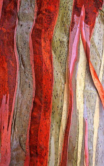 Alpine snowgum bark detail-1 by Speedy
