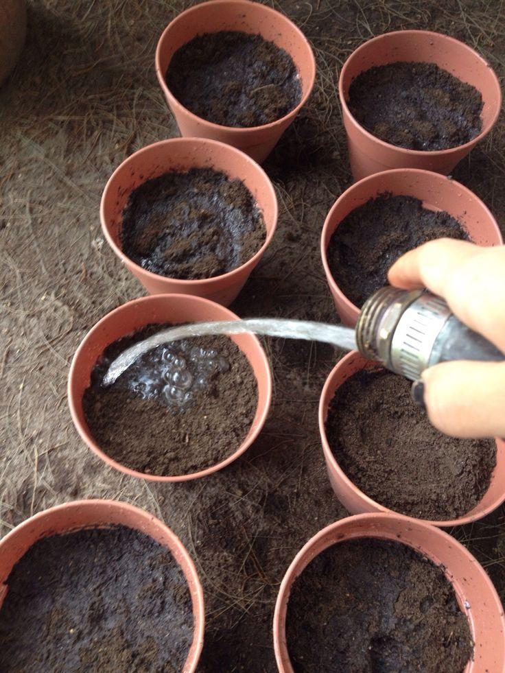 También GREEN CODECO comenzó a humedecer las macetas con la tierra fértil. Gaby Martínez- Domingo 22 de Marzo