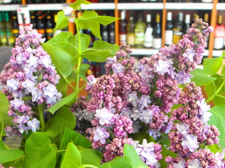 Nádherný orgován nám skrášľuje priestor ... ... www.vinopredaj.sk  #jar #orgovan #spring #vinoteka #inmedio #delishop #delikatesy #kvety #kvet #wineshop #flowers #delishop