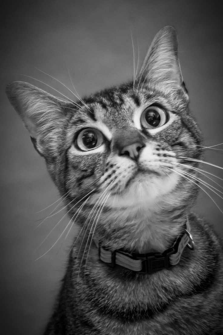 7 best My Own Pet graphy images on Pinterest
