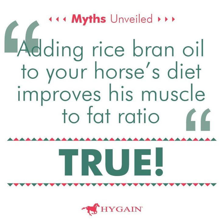 Research in horses showed the gamma oryzanol group (Gamma oryzanol is a rice bran oil derivative with two major active molecules, Sterol and Ferulic acid.) had improved muscle to fat ratio, with better muscle definition in the rump, neck and over the withers. The horses supplemented with gamma oryzanol also maintained appetite better than the control group. In addition, studies have shown that gamma oryzanol is a natural antioxidant and can lower cholesterol levels in the blood.