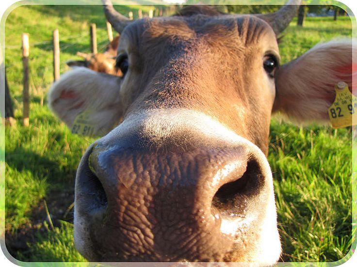 Cow Print Wine Glass