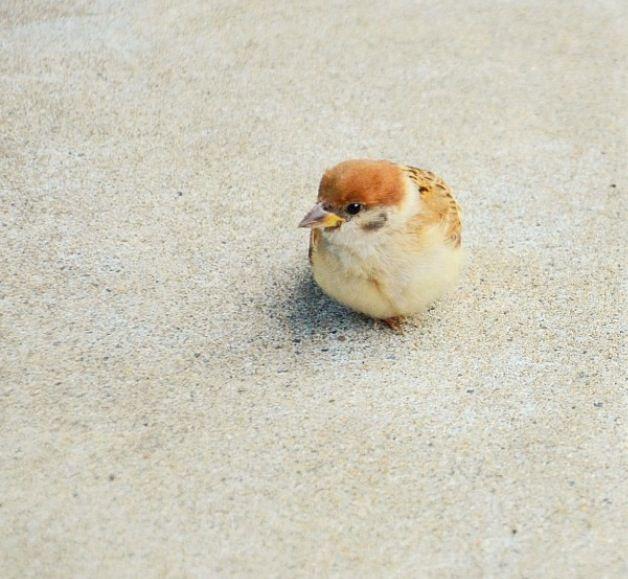 小さい小鳥