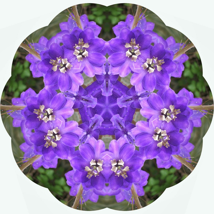 Mandala: Mandala Magic, Printable Mandala S, Image Mandala, Art Mandalas, Purple Mandala, Mandala Meditation