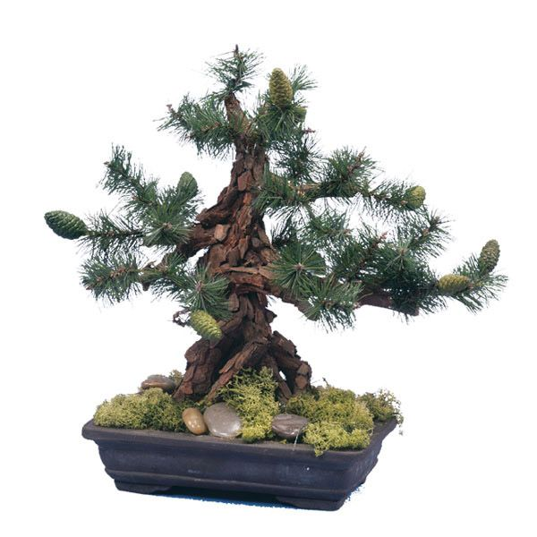 bonsai trees artificial bonsai trees indoor trees and office plants bonsai tree office