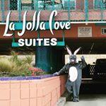 La Jolla Hotels On The Beach | La Jolla Cove Suites | San Diego Beach Hotels