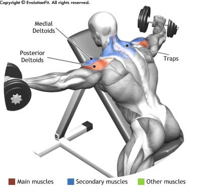 SHOULDERS -  DUMBBELL LYING REAR LATERAL RAISE