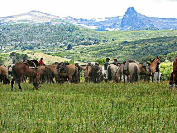 Caballos Criollos en la Patagonia