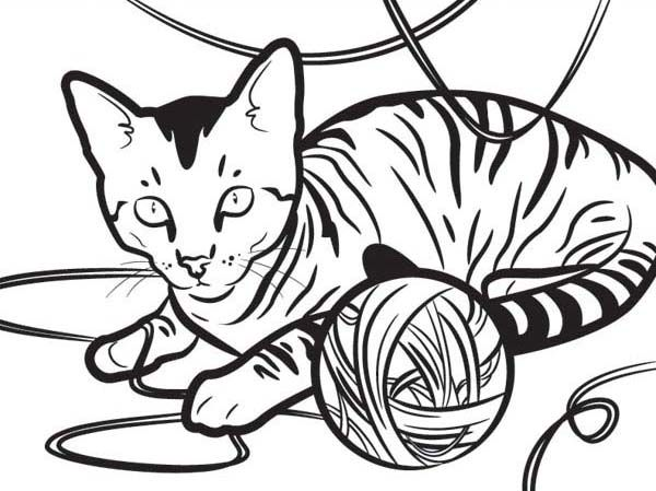 Kitty Cat, An Egyptian Kitty Cat Playing With A Yarn