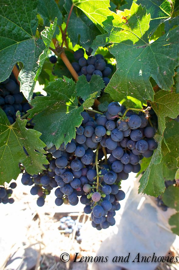 Taste of South America, Part 3: Wining and Dining in Mendoza, Argentina
