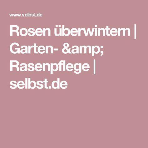 Rosen überwintern   Garten- & Rasenpflege   selbst.de