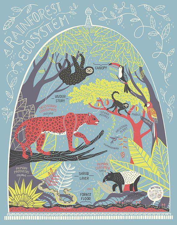 Un ecosistema di foresta pluviale: Stampa di Rachelignotofsky