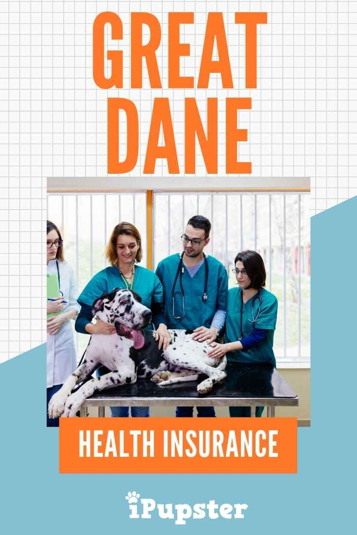 Pet Insurance For Great Danes Is It Worth It Dog Health Pet