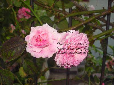 poema Contrasenso