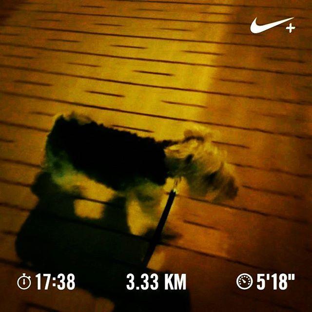 夜ラン #マラソン#ラン#ランニング#ランナー#走る#夜#トレーニング#ウェルシュ#テリア#ウェルシュテリア#犬#愛犬#marathon#run#running#runner#night#training#welsh#terrier#welshterrier#dog