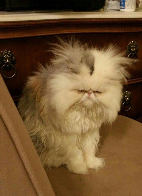 Grumpy kitty XD