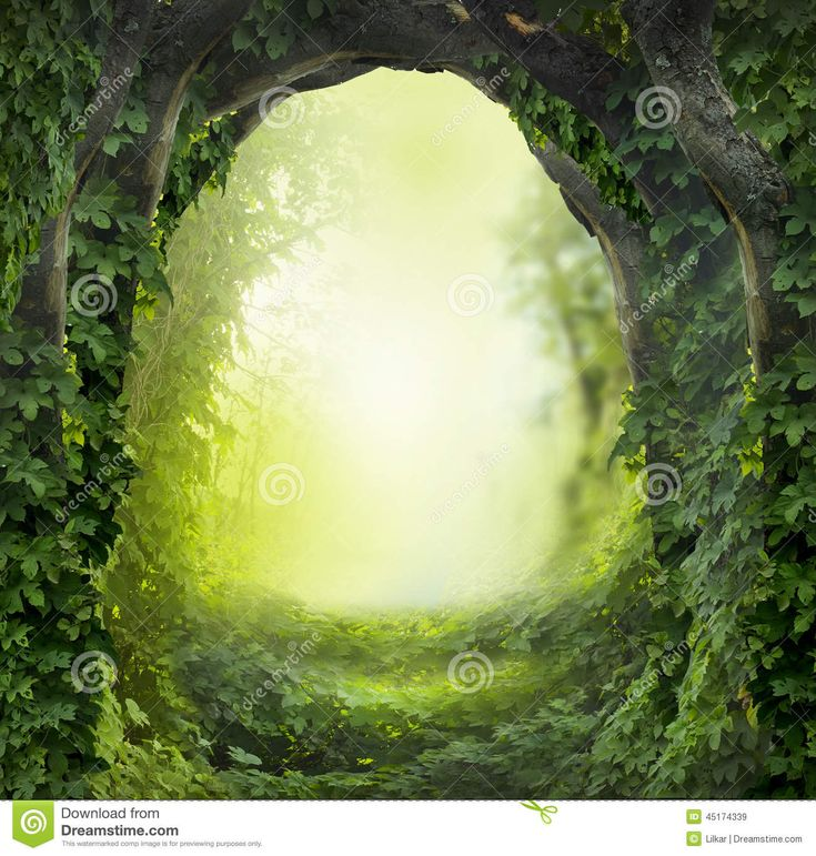 Magic Forest - Download From Over 46 Million High Quality Stock Photos, Images…