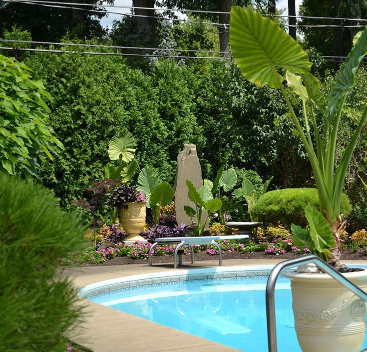 tropical landscaping around pool in amherst ny - Garden Ideas Around Swimming Pools