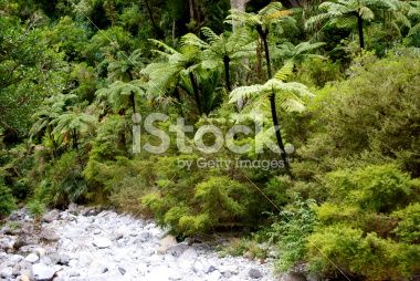 Punga Tree Ferns and Native Bush, New Zealand Royalty Free Stock Photo