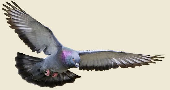 Getting Rid of #Pigeons from Under #SolarPanels http://bit.ly/1O4Hku9