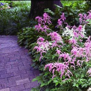 Planning Your New Shade Garden | Garden ClubPartial Shade means that the area receives between three and six hours of sunlight per day. Some examples of plants that you might find in a partial shade garden include: bleeding heart, boxwood, clematis, coneflower, hydrangea