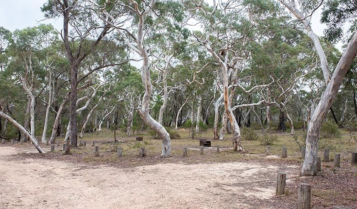 Wog Wog - No bookings. Approx. 3hrs. Morton NP. 2wd all weather