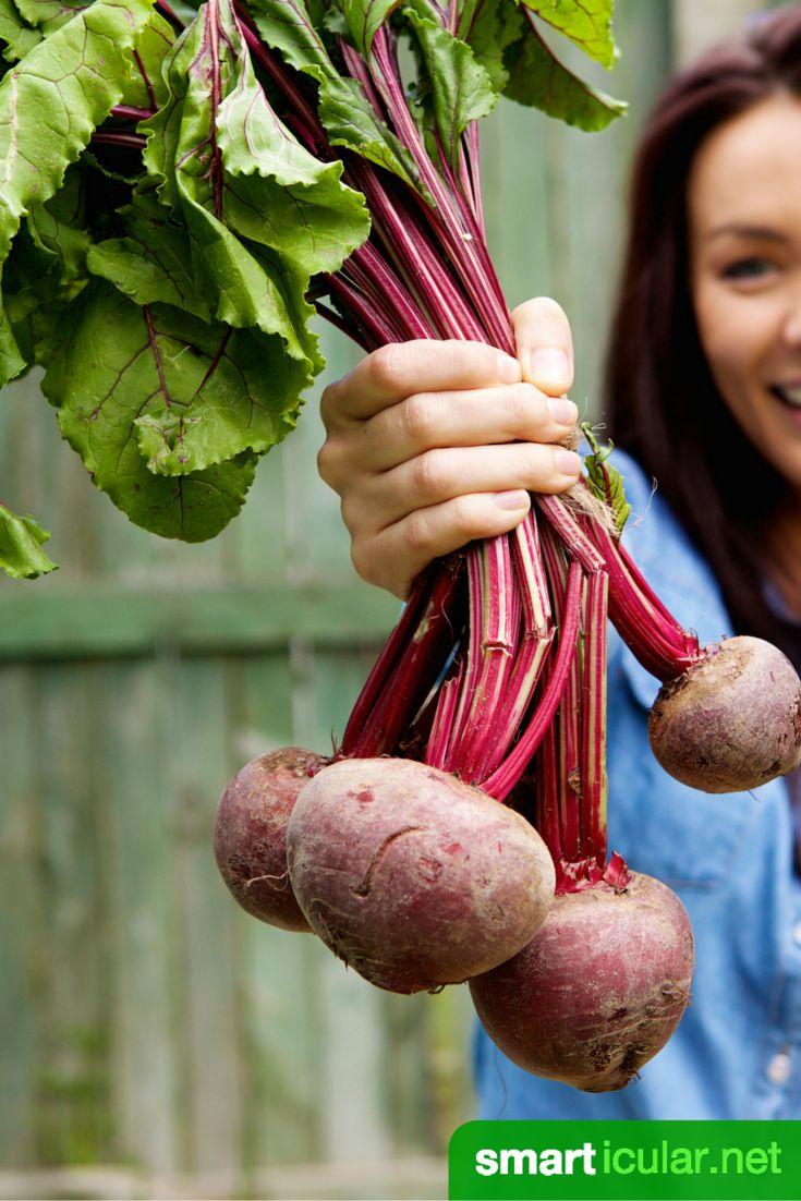Bio-Gemüse ist etwas teurer, dafür ist es nicht nur gesünder, du kannst auch viel mehr davon nutzen! So zauberst du leckere Gerichte aus essbaren Blättern.