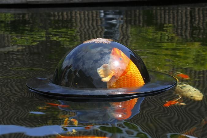 17 best images about pond stuff on pinterest japanese for Fish pond stuff