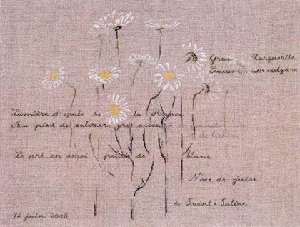 Marguerites de Saint-Suliac