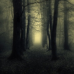 So is winter.Stunning Photography, Amazing Photography, Wood, Misty Forests, Beautiful, Dark Forests, Trees, Nature Photography, Visual Art