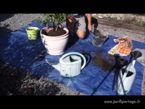 Rempoter une plante grasse: comment faire ?   Jardipartage