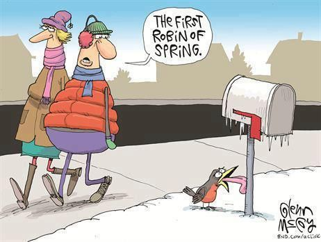 spring jokes and cartoons | Funny First Robin Of Spring Cartoon Image Picture