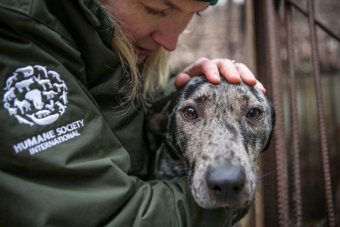 Last Year Thanks To Supporters Like You We Rescued Gracie From A Life Of Misery On A South Korean Dog Meat Farm After Arr Big Dogs Dogs Animal Activism