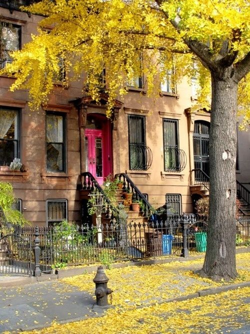 Brownstones on tree lined streets covered in fallen Gingko leaves in Autumn.  Brooklyn, New York City