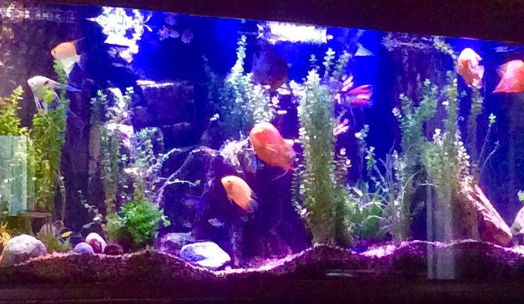 My 150 gallon Amazon fish tank