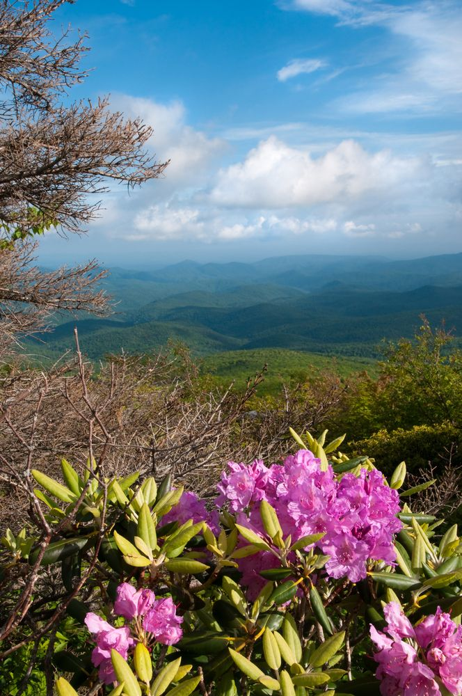 40 Best Images About Smoky Mountain Springtime On