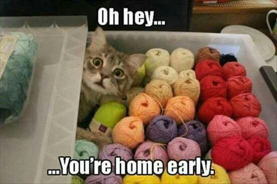 May this never happen to your yarn stash!