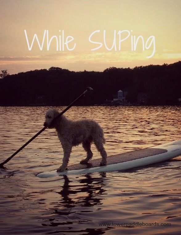 Even your dog can SUP!